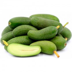AGUACATE MINI